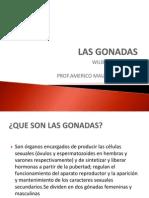 LAS GÓNADAS