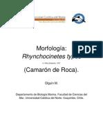 rhynchocinetes typus