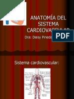 Anato Cardiovascular- Deisy