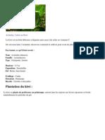 Kiwi _ Culture, Plantation Et Conseils d'Entretien
