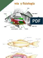 Anatomia Pez