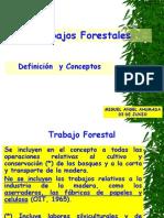 Trabajos Forestales 03 de Junio a