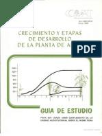 Crecimiento y Etapas de Desarrollo de La Planta de Arroz