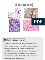 3 Matriz Extracelular