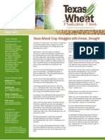 Texas Wheat Producers News - June 2013