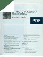 Bioquímica Tema 01 Estructura celular eucariótica