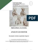 Descripcion 20Articular 20Apendicular 20Superior 202011 (2)