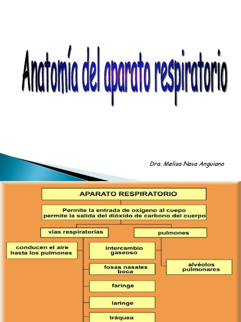 Anatomia AP. Resp. Prest.