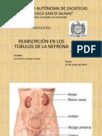 REABSORCIÓN EN LOS TÚBULOS DE LA NEFRONA
