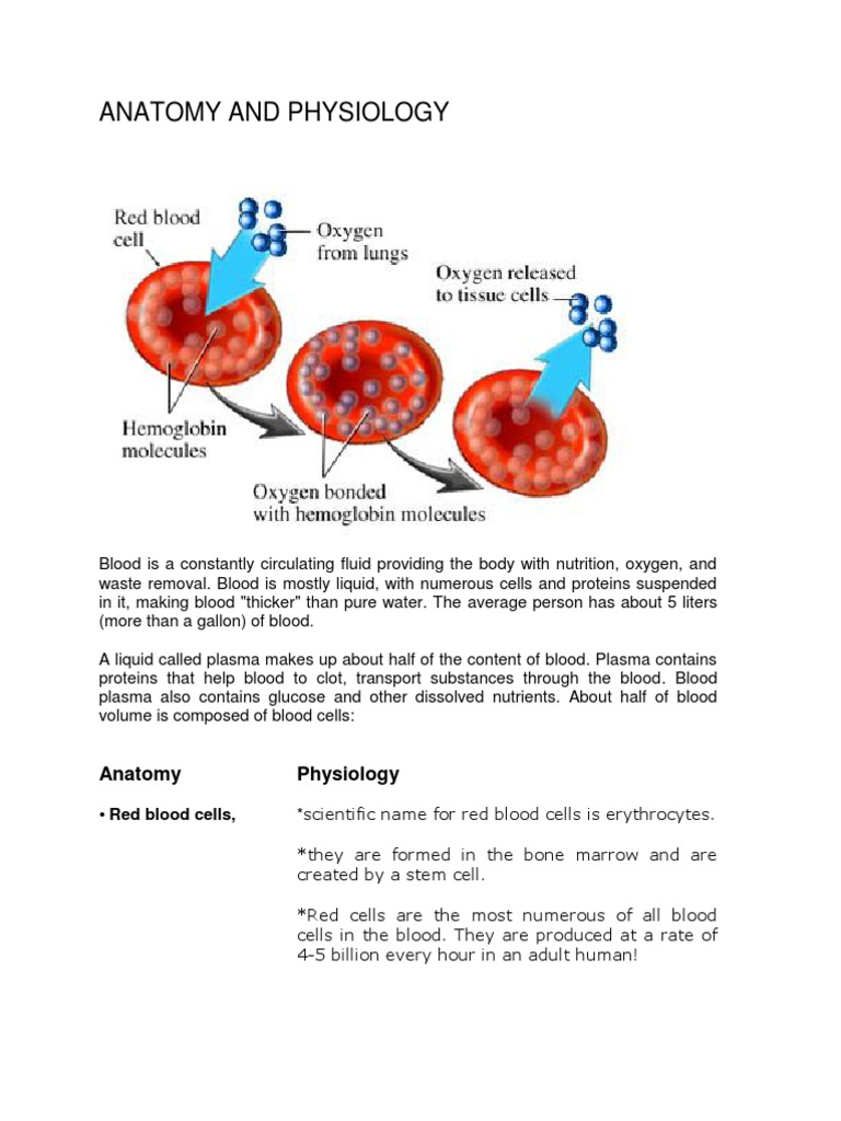Anatomy And Pathophysiology Of Anemia Granulocyte White Blood Cell