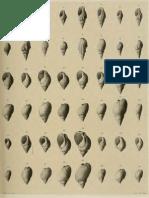 I molluschi dei terreni terziari del Piemonte e della Liguria; L. Bellardi, 1882 - PARTE 3 - Paleontologia Malacologia - Conchiglie Fossili del Pliocene e Pleistocene