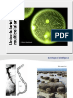 Bioegeo Unicelularidade Multicelularidade Jose Salsa
