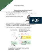 Bioquimica - Metabolismo