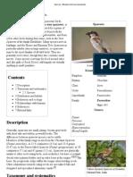 Sparrow - Wikipedia, The Free Encyclopedia