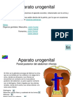 4_Aparato_genitourinario