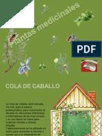 879-plantas_medicinales-(menudospeques.net) (1)