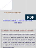 anatomiayfisiologiadelintestinodelgado-100703114405-phpapp01