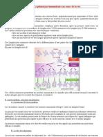 Chapitre 3.Le Phenotype Immunitaire Au Cours de La Vie
