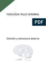 fisiologiatallocerebral.pptx