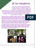 La Flora de Los Manglares