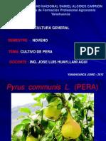 Cultivo Pera 1