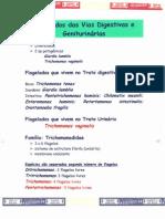 03 - Giardia e Trichomonas