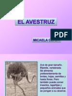 Avestruz Micaela