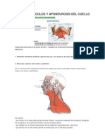 Aponeurosis Cervical