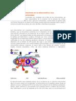 Alteraciones y Mutaciones en La Mitocondria y Sus Enfermedades Relacionadas