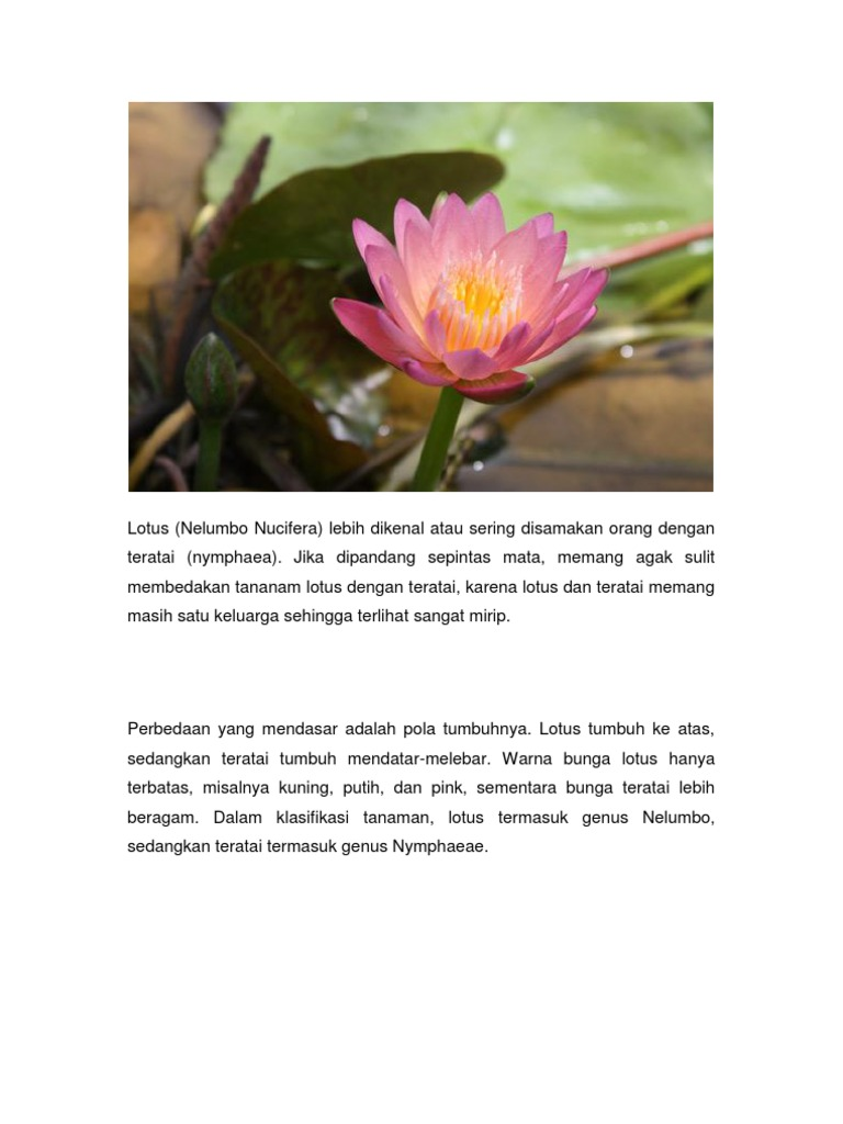 Kajian Bunga Teratai