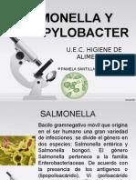 Samonella y Campylobacter