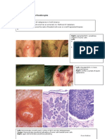 Pathology of Common Skin Diseases With Clinical Correlates
