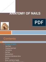 Anatomy of Nail