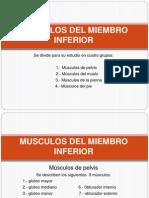 Muscolos Miembro Inferior