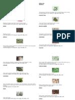 comida para iguanas.docx