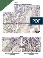 Histologie Si Embriologie - LP7-Tesutul Muscular Si Sange