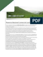 Lomas de Lachay Lima