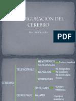 CONFIGURACIÓN DEL CEREBRO