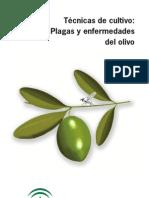Plagas y Enfermedades Del Olivo