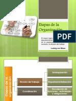 etapas de la organizaci+¦n