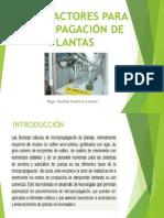 BIORREACTORES PROPAGACION PLANTAS