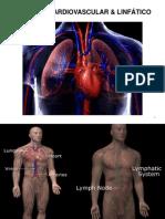 AC_Aparelho Cardiovascular-Respiratório
