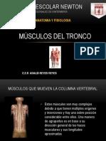 10.- Musculos de Tronco
