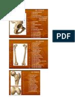 Anatomi Femur