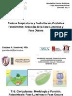 Cadena Respiratoria - Fotosintesis
