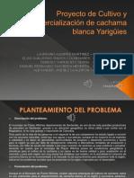 Proyecto cachama pisc