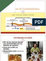 Absorción de Carbohidratos UdeC 2013