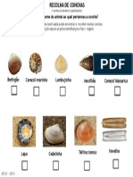 Ficha de campo - recolha de conchas