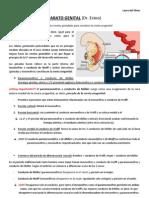 04-27_embriologia Apto. Genital