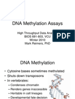 4 - DNA Methylation Assays